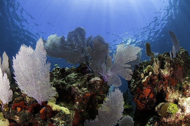 Shallow reef.